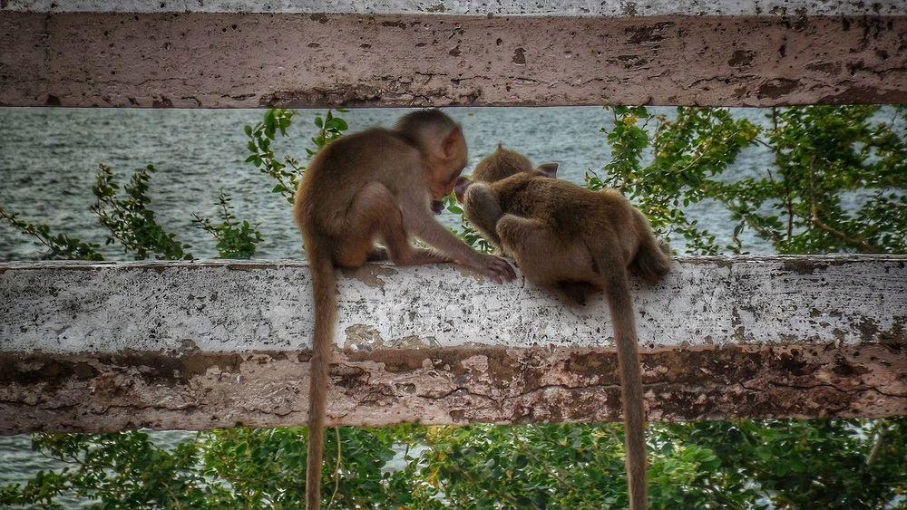 Animals In The Wild Animal Themes Animal Family Animal Wildlife Monkey Animal Photography Animals In The Wild Monkey Mountain Monkeys