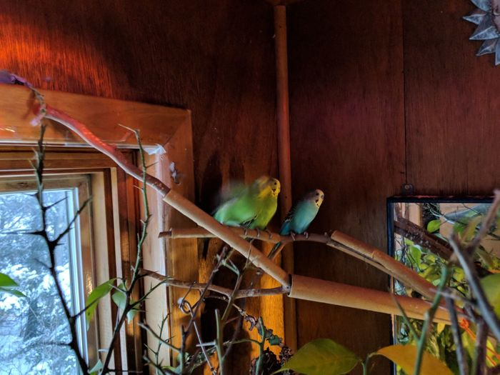 Low angle view of parrot perching in cage
