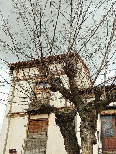 The Architect - 2016 EyeEm Awards Rural Architecture Covarrubias Burgos, Spain Burgos Tree Tree Branches Tree Branch Against The Sky Grey Sky Rural Village Medieval Architecture