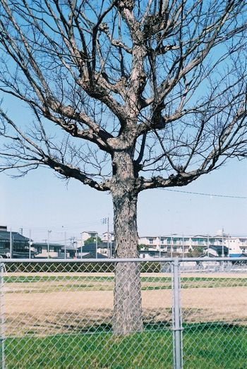 Pentax SpII Fujicolor Industrial 100 Sky Tree Tree City Bare Tree Sky Grass