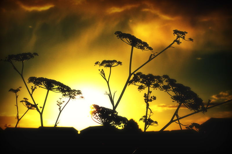 Burning sky Sky Burningsky Nature Plant Botany Sunset Eastney Southsea Hampshire  England Sunset Silhouette Sky Close-up Plant