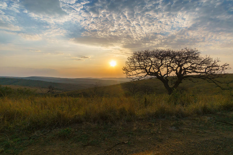 Sadly the great sunsets in South Africa are gone so quick! EyeEm Nature Lover South Africa Travel Bare Tree Beauty In Nature Day Eye4photography  Grass Hluhluw-imfolozi Park Landscape Majestic Nature No People Outdoors Scenics Sky Sony A6000 Sun Sunset Tranquil Scene Tranquility Travel Destinations Tree The Week On EyeEm The Great Outdoors - 2018 EyeEm Awards