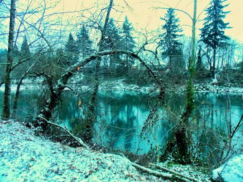 Taking Photos Check This Out Gladstone OR. Snow ❄ Clackamas River Flexible Tree