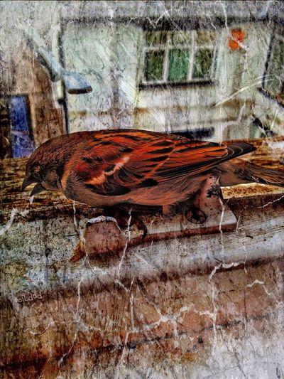 Animals Birds Wildlife The Fragile