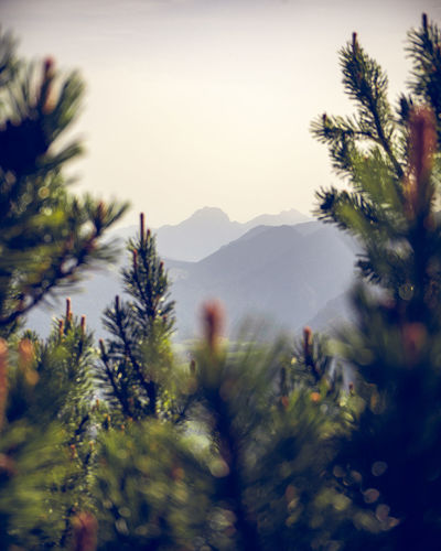 View to the bavarian alps from Hirschberg to the east. Hirschberg, Bavaria, Germany, June 2019 Germany Hirschberg Tergernsee Plant Beauty In Nature Sky Mountain Nature Tree No People Day Tranquility Scenics - Nature Outdoors Tranquil Scene Environment Mountain Range Bavarian Alps Bavaria Wendelstein Growth Selective Focus Clear Sky Blurred Motion Coniferous Tree