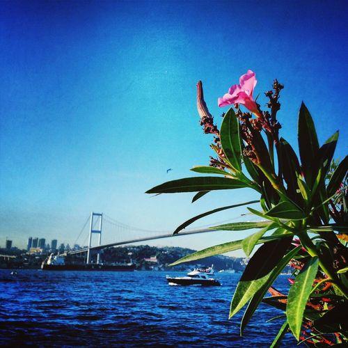 Landcape_collection Sea Bridge EyeEmbestshots