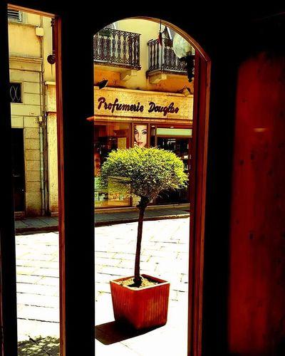 Vercelli Piemonte👍🏻 Piemonte_super_pics Piemonte_city Piemonte Piemonteturismo Piemonte_best_pics Piemontese Piemontexperience Piemonte_bestsunset Window Day No People Outdoors Architecture Tree Nature Close-up