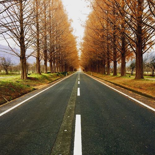 Japan Change Country Day Diminishing Perspective Direction Dividing Line Empty Road Nature No People Outdoors Plant Road Road Marking Sign Straight Surface Level Symbol The Way Forward Tranquil Scene Tranquility Transportation Tree Treelined vanishing point