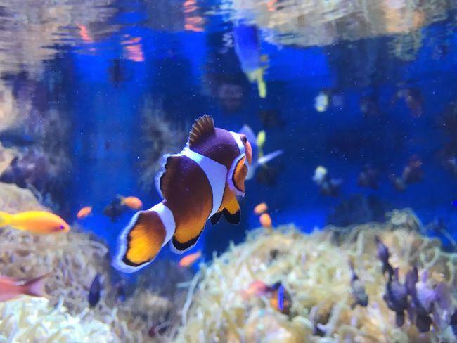 鳥羽水族館 Fish Water Nature No People One Animal Japan Enjoy Holiday ニモ(^○^)