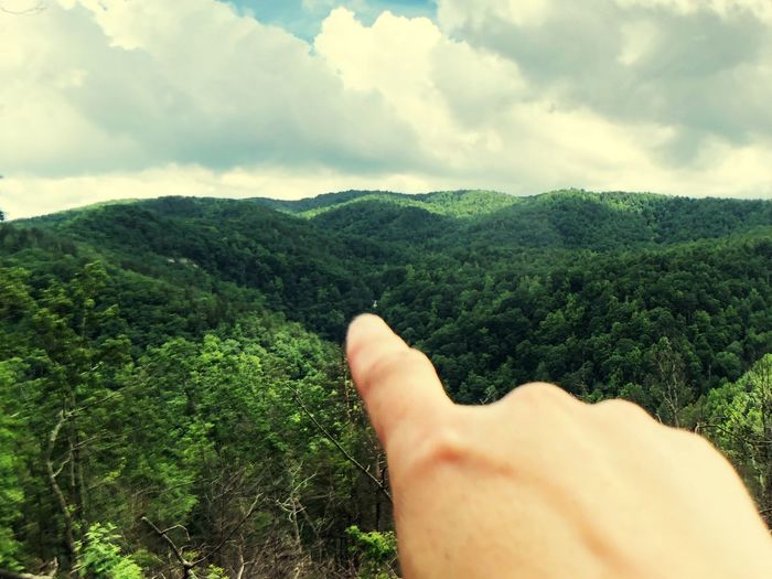 Midsection of person hand amidst trees against sky