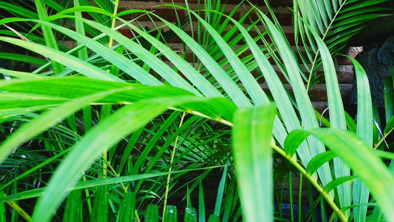 green color, growth, leaf, plant, nature, grass, outdoors, day, no people, close-up, beauty in nature, frond, freshness