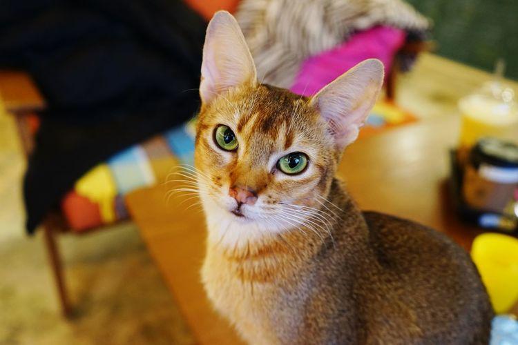 한동안 카메라를 빤히 응시하던 고양이녀석 Cat Cats Animals A7