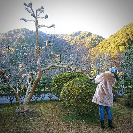 写真を撮る女性 冬の空 帽子 樹 日本 Sky Tree 冬の空気 見上げる Japan Japan Photography 春よ来い お参り 梅の花 静岡市葵区 洞慶院 梅園 羽鳥 梅の花びら 写真を撮る女性 Woman Outdoors Day One Person Nature Sky Beauty In Nature Water