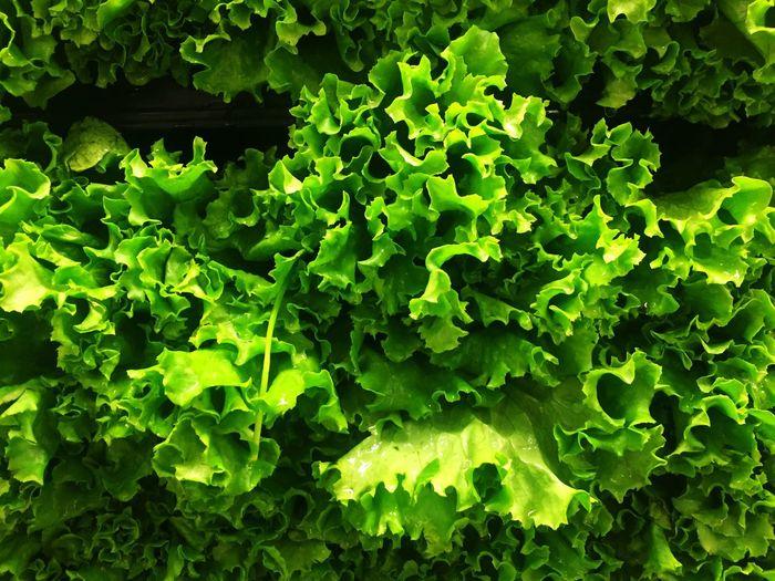 Full frame shot of lettuce for sale in market