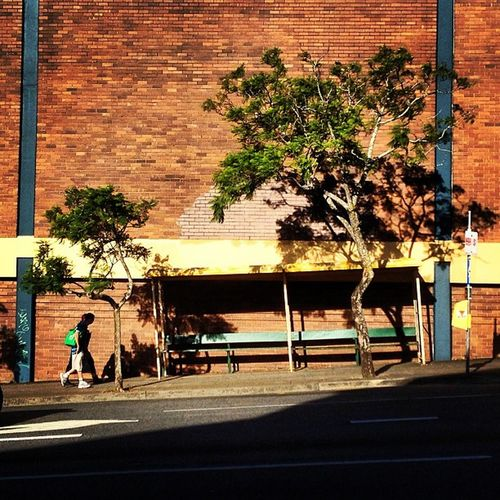 Leaning Bus Shelter of Coorparoo
