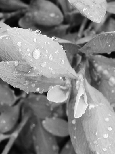 Drop Wet Water Nature Rain Beauty In Nature Dew Plant Freshness Fragility Close-up Flower RainDrop Growth Weather Leaf Outdoors Flower Head Petal No People