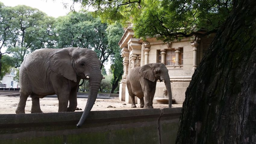 There's just something magnificent about Elephants No People Wonderful EyeEm Buenos Aires, Argentina  Tourist Travel EyeEm Best Shots Peaceful