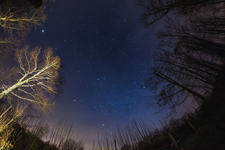 Low angle view of bare tree against star field