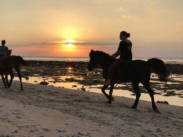 Sunset beach Horse sunset beach Horse Beach horse ridding Wallpaper bali INDONESIA sunset ride Evening Ride dust Water wated beach Water Sunset