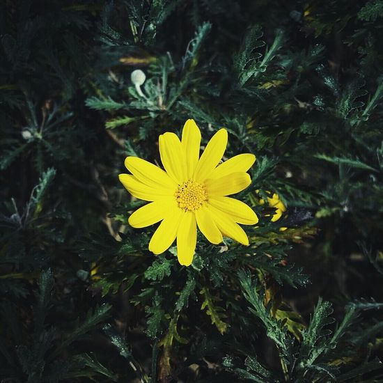 Sochi Flower Green Flowers Instagram First Eyeem Photo