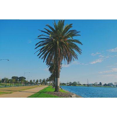AlbertPark Lake Melbourne VSCO vscocam