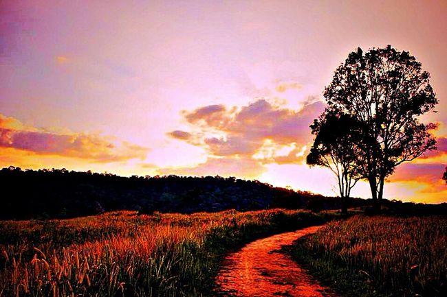 Landscape Landscape_Collection Nature Sunset