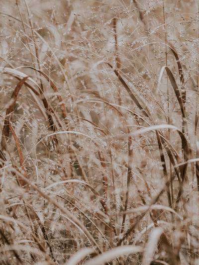 Dry grass, full frame texture Plant Full Frame No People Backgrounds Close-up Day Nature Growth Dry Selective Focus Outdoors Vulnerability  Land Tranquility Fragility Field Textured  Beauty In Nature Brown Pattern Stalk
