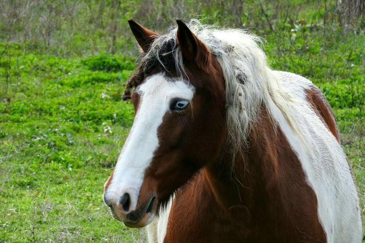 Horse Horse One