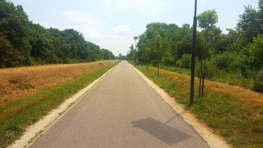 This is a forest from Budapest Bridge Brook Forest Photography Graffti Grass Park Seat Table Tree