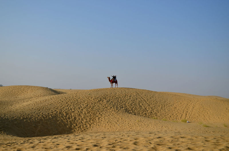 Camel Standing At Desert Against Clear Sky