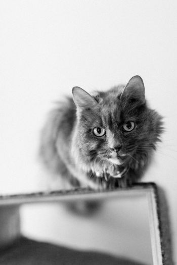 Catty the cat Cat Feline One Animal Animal Themes Mammal Domestic Cat Animal Pets