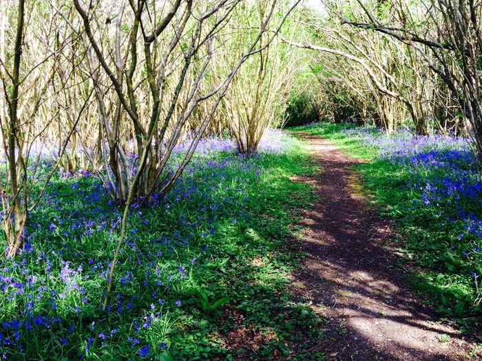 Walking Around Taking Photos Springtime Bluebells Bluebell Wood West Sussex Enjoying Life EyeEm Nature Lover
