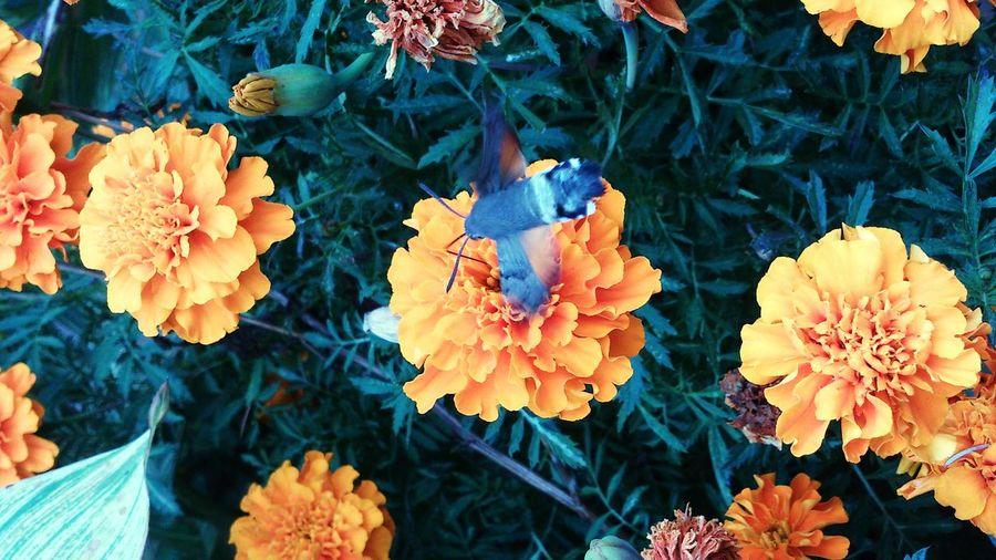 Kolibry. Crimea various Flower Beauty In Nature Botany Nature Bloom Baterfly Lepidoptera Crimea Yalta Nikita Botanical Gardens