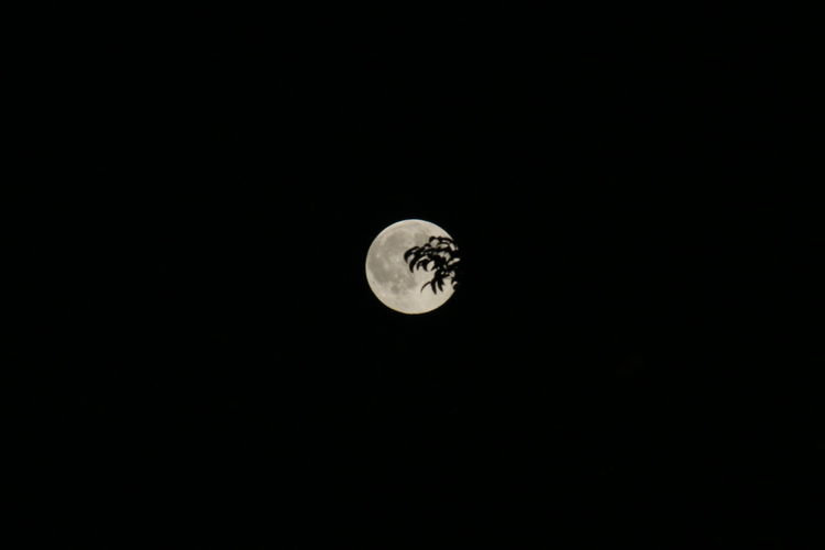 Night Of The Fool Moon Do You See What I See? Tiger Full Moon 🌕 Moon Light Moon Full Moon Behind Trees Moonlight Moon_collection Macro Nature_collection Macro Photography Nature Full Moon Taking Photos Be. Ready.