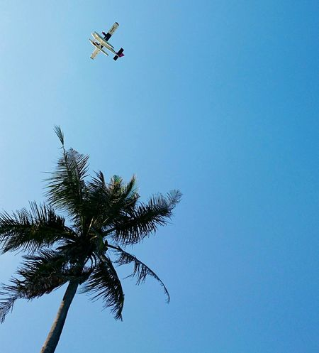 Paradise Beach Relaxing Vacations Holiday Sky Plane Palmtree Maldives Airtaxi An Eye For Travel Clear Sky Airplane Transportation Blue Outdoors Nature Day No People Palm Tree Low Angle View Tree Flying Mid-air Copy Space