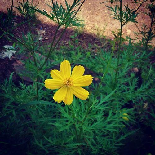 Flower Xiaomiclick_id Xiaomipics Redmi1s Flower Idxiaomiography