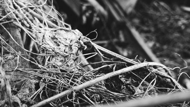 Nature No People Grass Plant EyeEmNewHere EyeEm Gallery Macro Photography черно-белое черно-белое фото чбфото Чб чбфотография чернобелоефото Nature EyeEm Best Shots - Black + White Black&white Black & White BW Collection Textured  BW Transcience Plant Eye Em Nature Lover Macroshot Macro_collection Macro_perfection