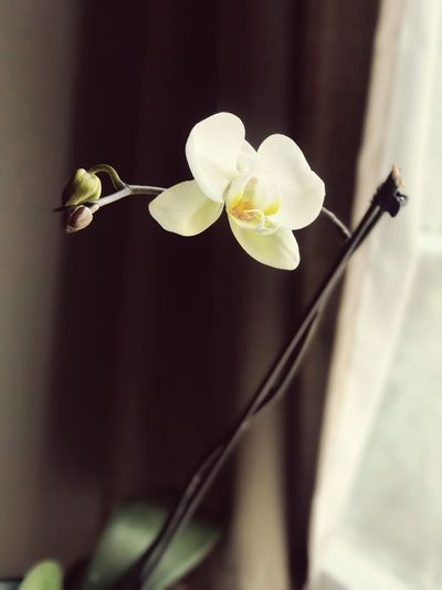 Life Orchid Orchid Blossoms Flower Plantlife Springtime Spring