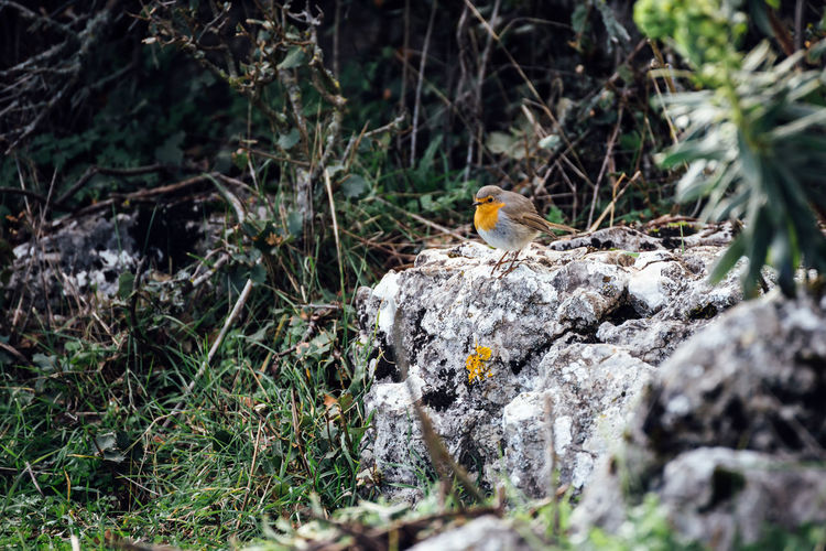 Animal Bird Nature No People Outdoors Robin Rock Sierra Del Torcal Torcal De Antequera Tranquility
