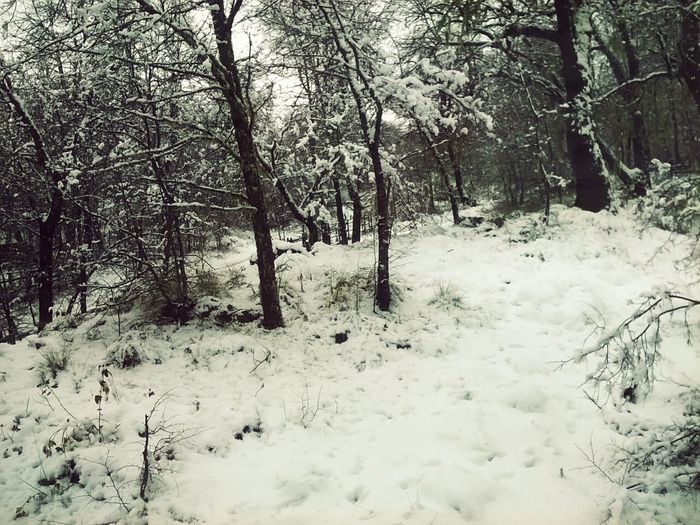 """""""Nieve que baña todo..."""" Chile NevadosDeChillan Relaxing"""