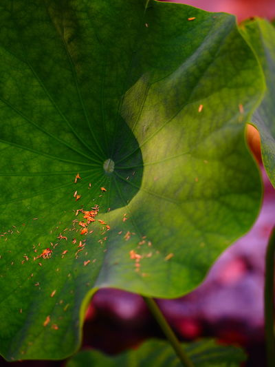 Asian Culture Green Green Color Nature Nature Photography Asian Garden Garden Garden Photography Green Red Fu High Contrast Filter Leaf Modern Art No People Radiating