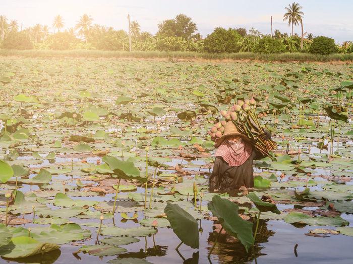Full frame shot of lotus water lily in lake