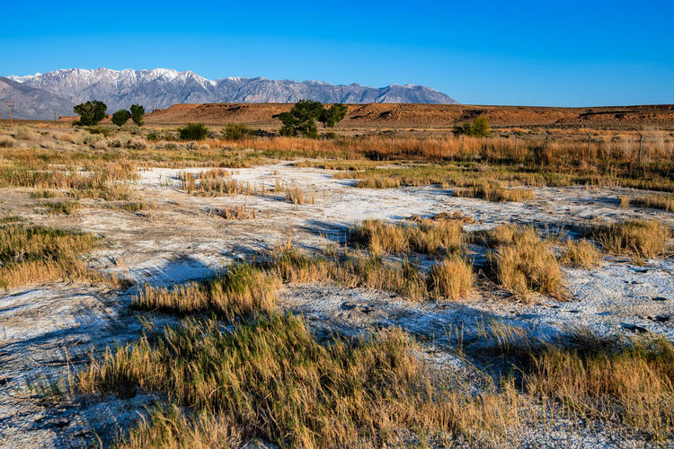 White minerals remain on ground in dry marsh land of owens valley california
