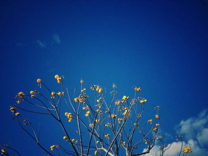 View of plant against blue sky