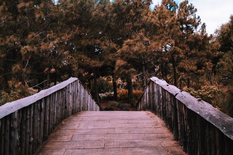 EyeEm Best Shots EyeEmNewHere Gran Canaria SPAIN Autumn Bridge Bridge - Man Made Structure Built Structure Change Connection Day Direction Footbridge Footpath Forest Growth Jardin Canario Nature No People Outdoors Plant Railing The Way Forward Tree Wood - Material
