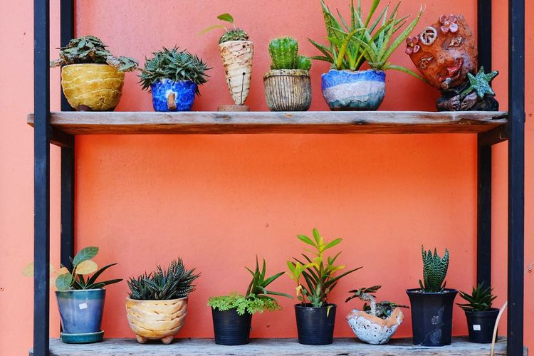 Various of plant in handmade clay pot for decorated Exterior Art And Craft Nature Cactus Summer Spring Shelf Garden Outdoors Decoration Colorful Various Handmade Clay Pot Clay Pottery Clay Work Plants And Flowers Potted Plant Plant Growth Cactus Houseplant Variation No People Nature Herb Multi Colored Leaf Day Freshness