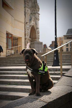 Lucky Luke au pied de la Cathédrale D'Amiens