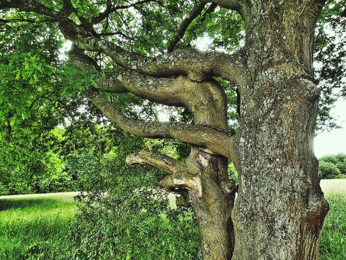 A Tree Hugging A Tree 💚 Green Love Tree Love Close Embrace TreesEntwined Into Each Other Nature All Shades Of Green Wooden Love Beliebte Fotos Treescape Tree Of Life
