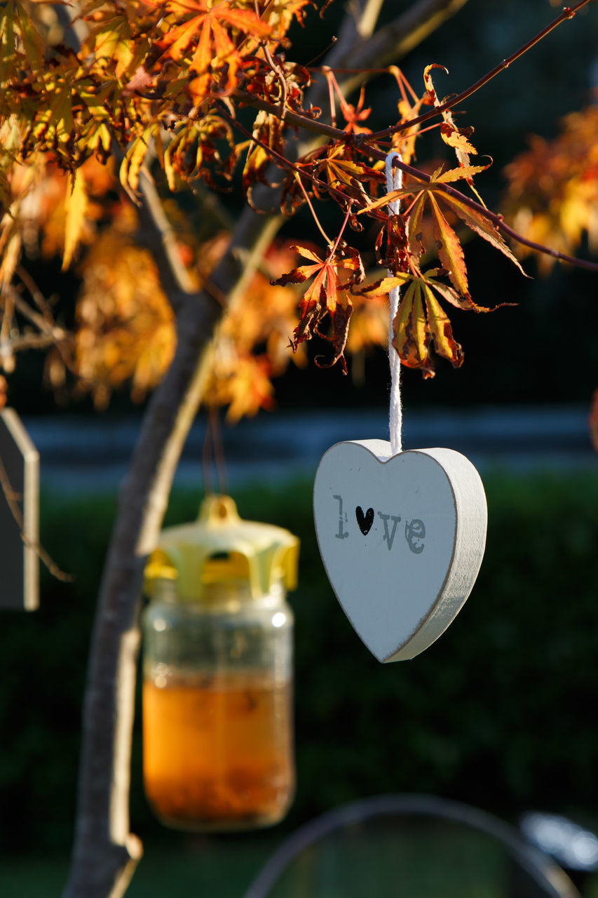 focus on foreground, plant, nature, heart shape, close-up, leaf, hanging, day, no people, tree, plant part, outdoors, love, selective focus, positive emotion, autumn, beauty in nature, food and drink, emotion, orange color, change, glass
