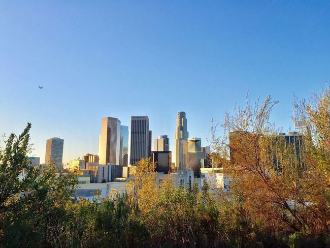 Downtown LA at Sunrise Los Angeles, California Eyeem Philippines Architecture Skyscraper Building Exterior Clear Sky Tree Built Structure City No People Growth Cityscape Urban Skyline Day Outdoors Modern Sky